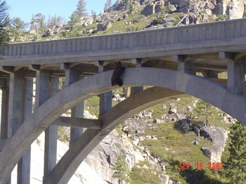 Bear Bridge1
