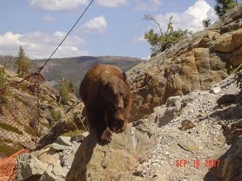 Bear Bridge6