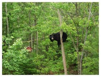 Bear Feeder1