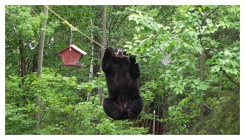 bear_feeder2
