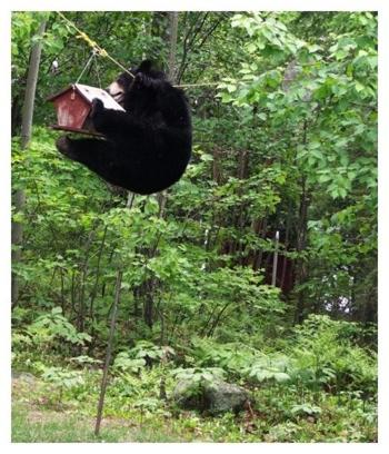 bear feeder4
